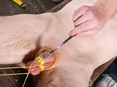 Tied Cock